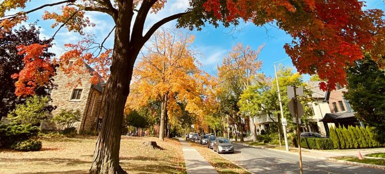 Toronto street in the fall