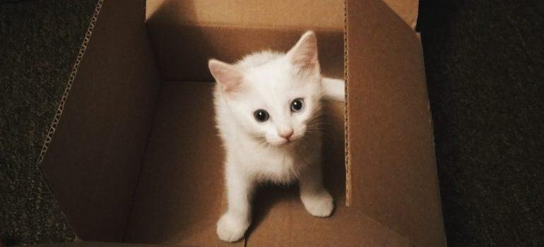 kitten inside a cardboard box