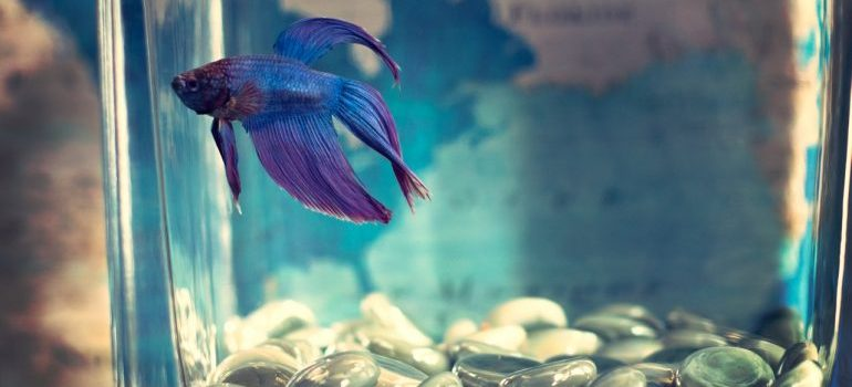Fish tank with a beautiful fish in it