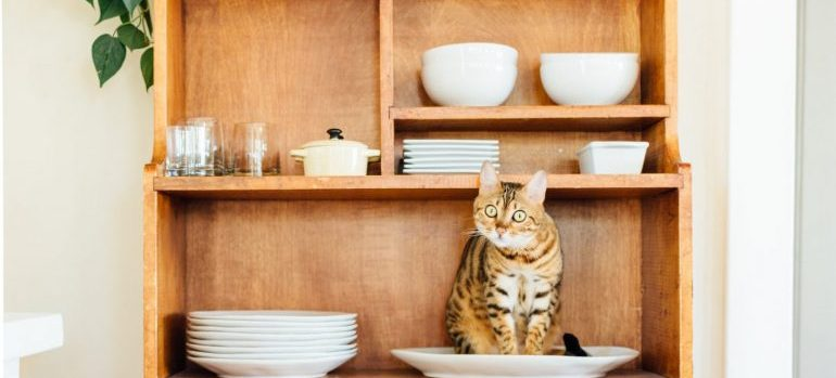 A tabby cat in a porcelain plate on a wooden shelve