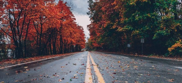 A dump road surrounded with fall foliage